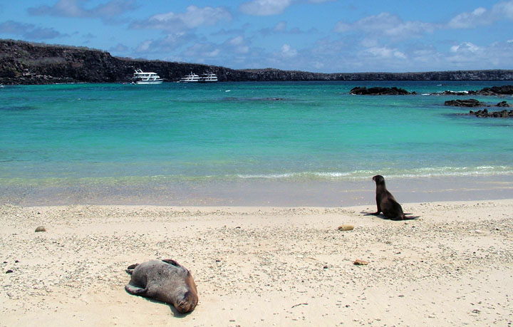 Adventure Travel - www.letsbewild.com - The Galápagos Islands - Natalie Holmes -