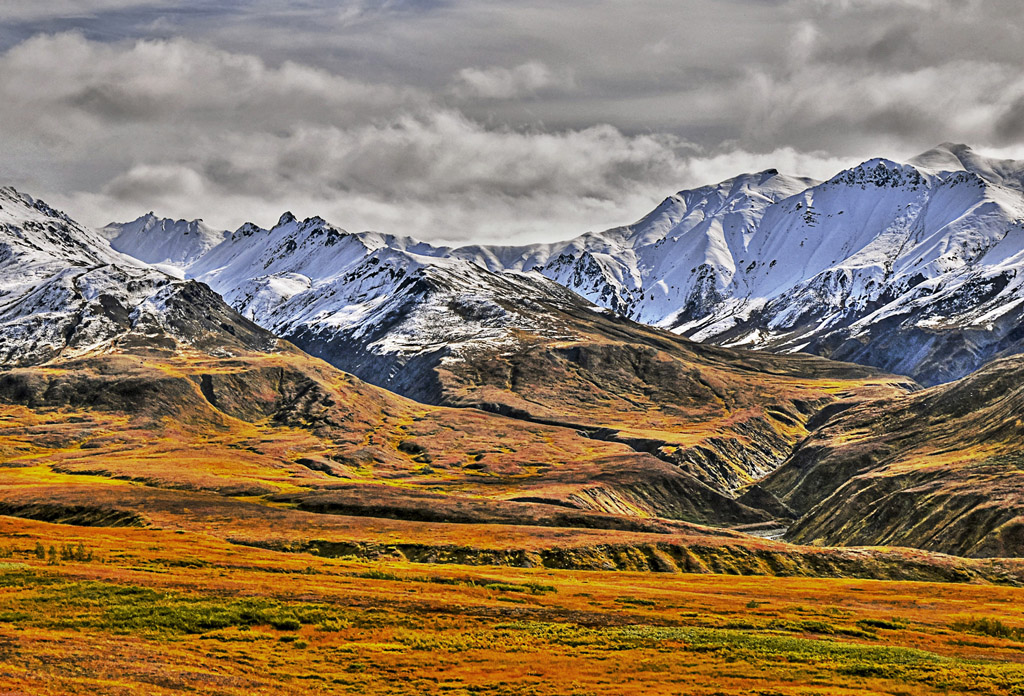 Photo of the Day - www.letsbewild.com - On the Denali Tundra: Denali National Park, Alaska - Terry Lawson
