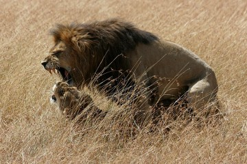 Adventure Travel Photo of the Day - www.letsbewild.com - Passions in Maasai Mara, Maasai Mara National Reserve, Kenya - Claudette Gravel