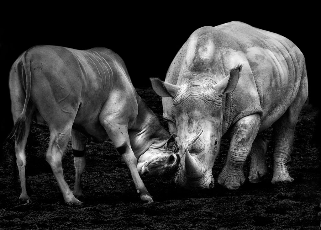 Adventure Travel Photo of the Day - www.letsbewild.com - Fight between animals - Pepi Martin
