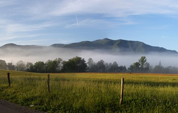 Adventure Travel Photo of the Day - www.letsbewild.com - Glad to be Home, Cades Cove, Great Smoky Mountains National Park, Tennessee - Chris Schultz