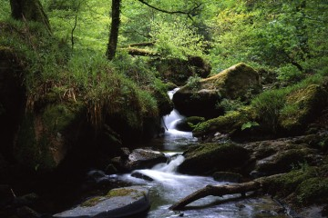 Adventure Travel Photo of the Day - www.letsbewild.com - Stream through the woods, Cornwall, England - Samuel Jay Photography