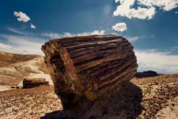 Adventure Travel Photo of the Day - www.letsbewild.com - Petrified Forest National Park, Arizona - Nick Zantop