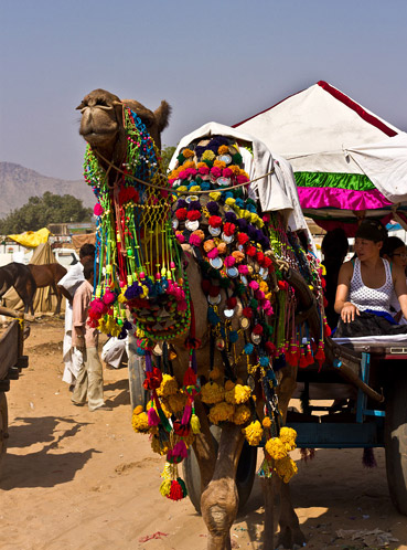 Adventure Travel: The Colors of Pushkar - India's Premier Camel & Horse Fair by Gina McKnight