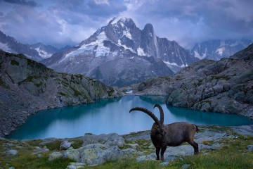 Adventure Travel Photo of the Day - www.letsbewild.com - Male Alpine Ibex at Sunset, Lac Blanc, Chamonix-Mont-Blanc, Haute-Savoie, France - Yuzuru Masuda
