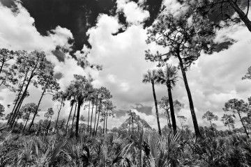 Adventure Travel Photo of the Day - www.letsbewild.com - Florida Panther National Wildlife Refuge - Nick Zantop