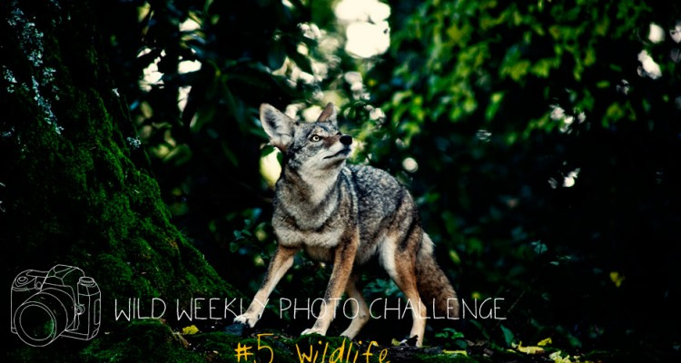 Wild Weekly Photo Challenge #5 - Wildlife