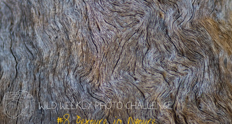 Wild Weekly Photo Challenge #8 - Texture in Nature