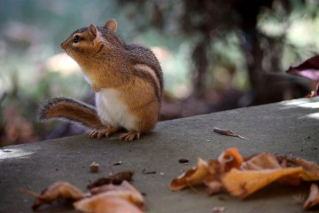 Adventure Travel Photo of the Day: Chipmunk