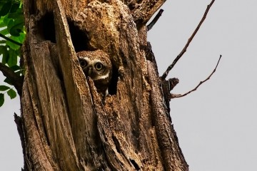 Adventure Travel Photo of the Day: Owl in Kolkata, India