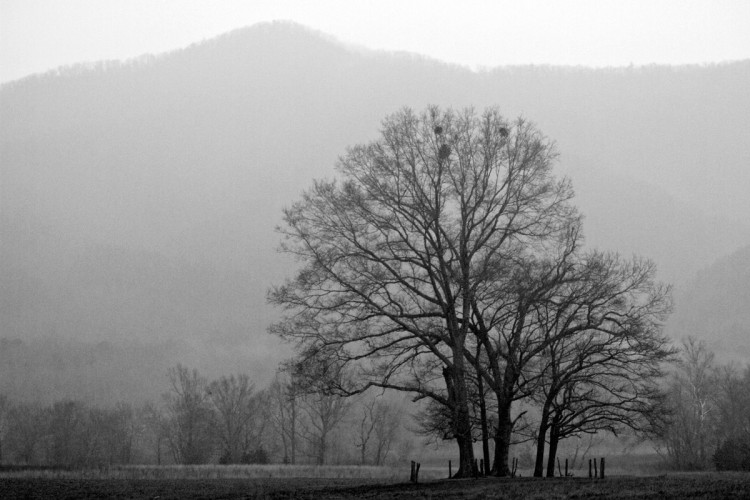 Visiting popular locations, like Cade's Cove above, on rainy days will almost always keep the crowds away.