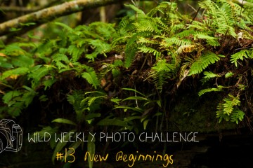 Wild Weekly Photo Challenge #13 - New Beginnings!