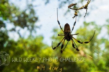 Wild Weekly Photo Challenge #14 - Scary