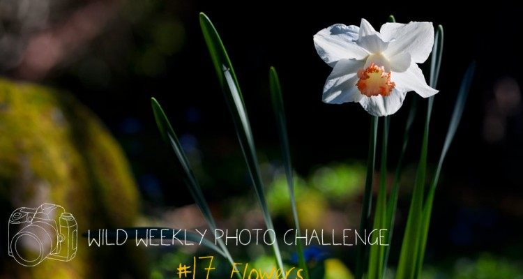 Wild Weekly Photo Challenge: Flowers!