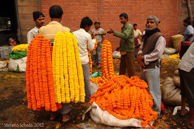 Wild Weekly Photo Challenge - Mullik Ghat Flower Market
