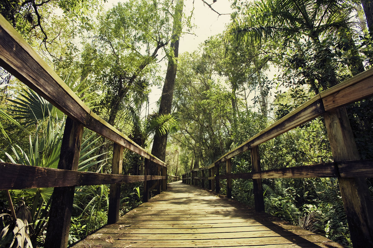 Adventure Travel Photo of the Day: Fakahatchee Strand Preserve