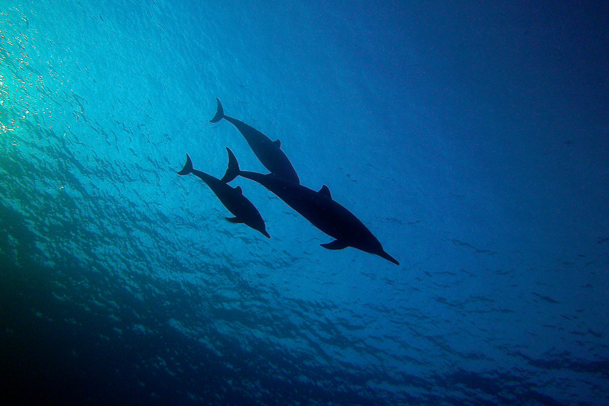 Adventure Travel Photo of the Day: Spinner Dolphins in Hawaii