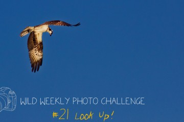 Wild Weekly Photo Challenge #21 - Look Up!