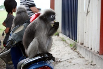 Photo of the Day: Ao Manao Monkey