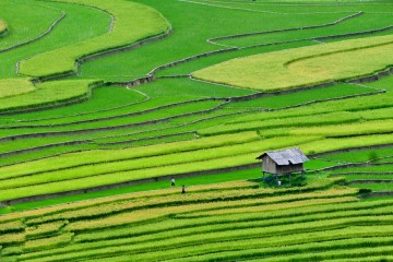 Rice Terraces in North Vietnam