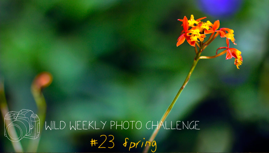 Wild Weekly Photo Challenge: Spring