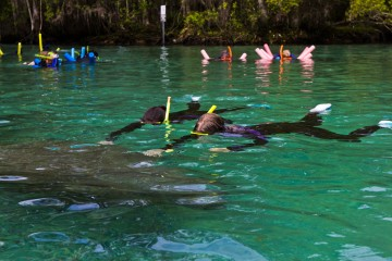 Photo of the Day: Swimming with Manatees