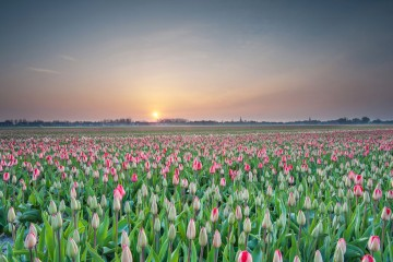 Photo of the Day: Lisse, The Netherlands