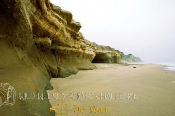 Wild Weekly Photo Challenge: The Beach