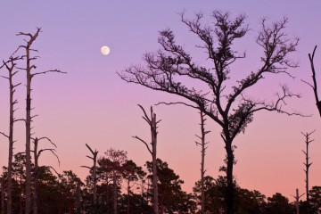 Moonrise over Ocala's Juniper Prairie Wilderness