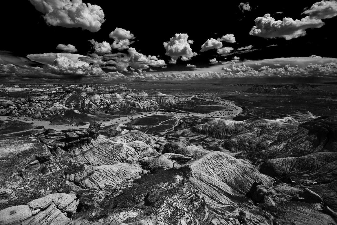 petrified-forest-10
