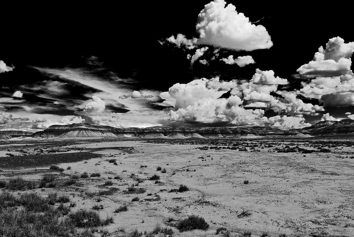 petrified-forest-5