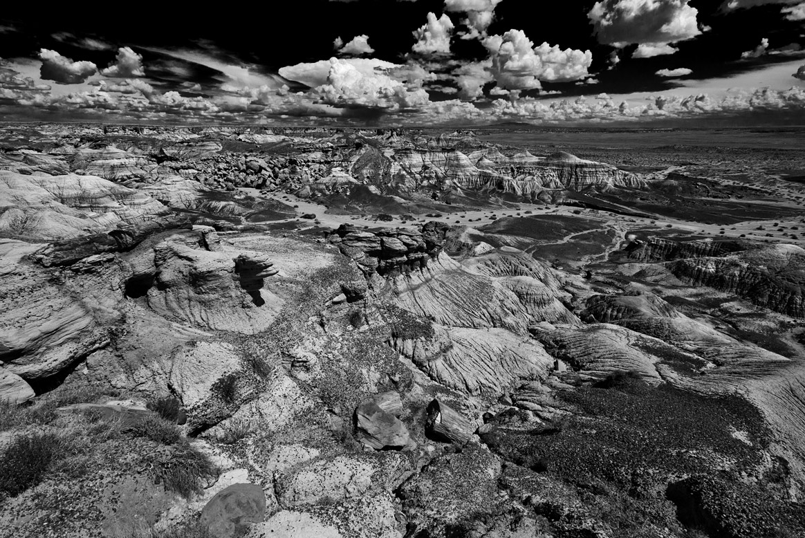 petrified-forest-8