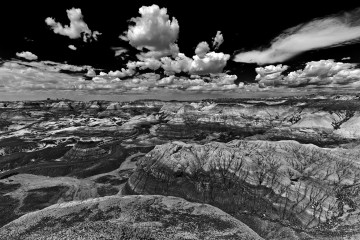 petrified-forest-9