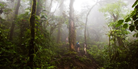 Costa Rica Rainforest Hiking on Cerro Chato
